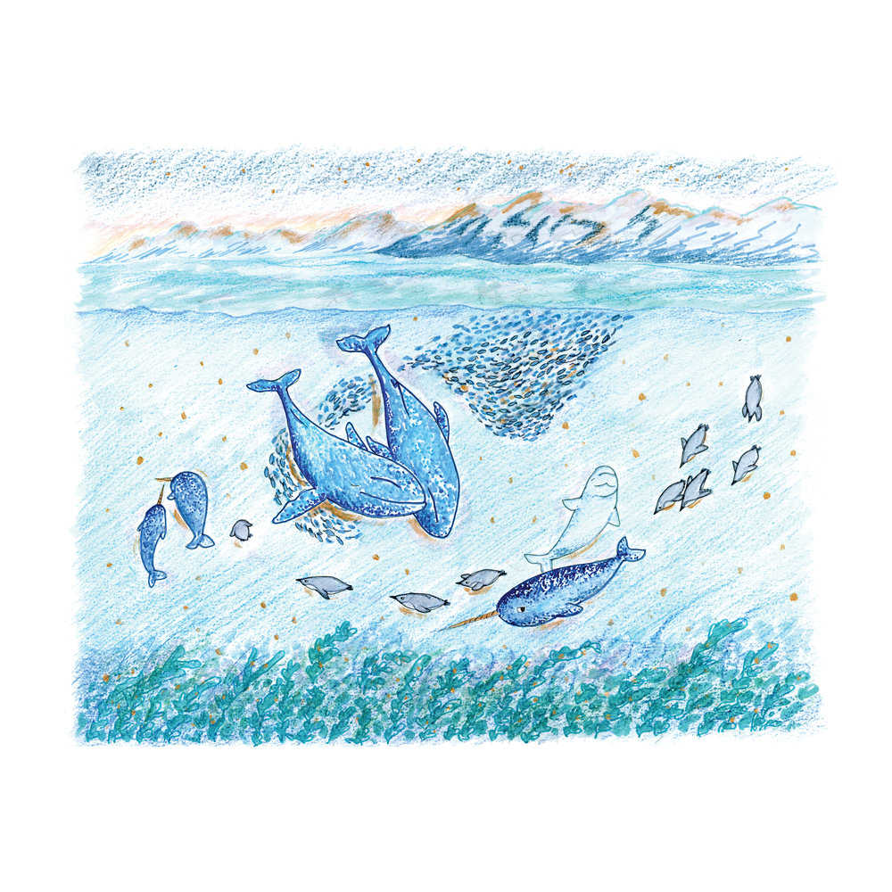 HOLIDAY 2017 - ARCTIC OCEAN