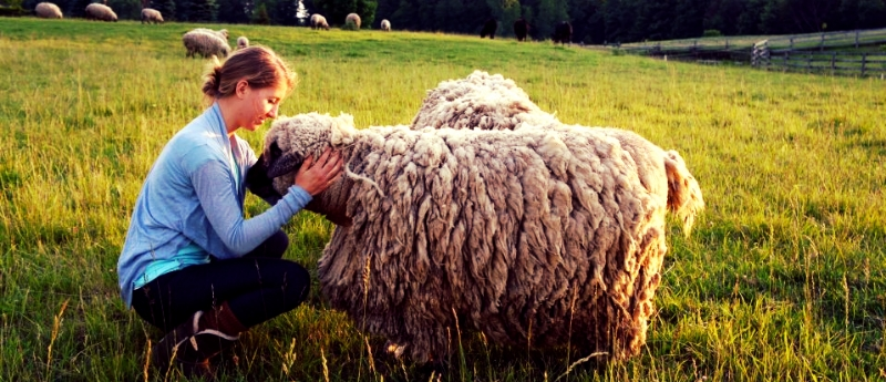 Amy and Sheep.jpg