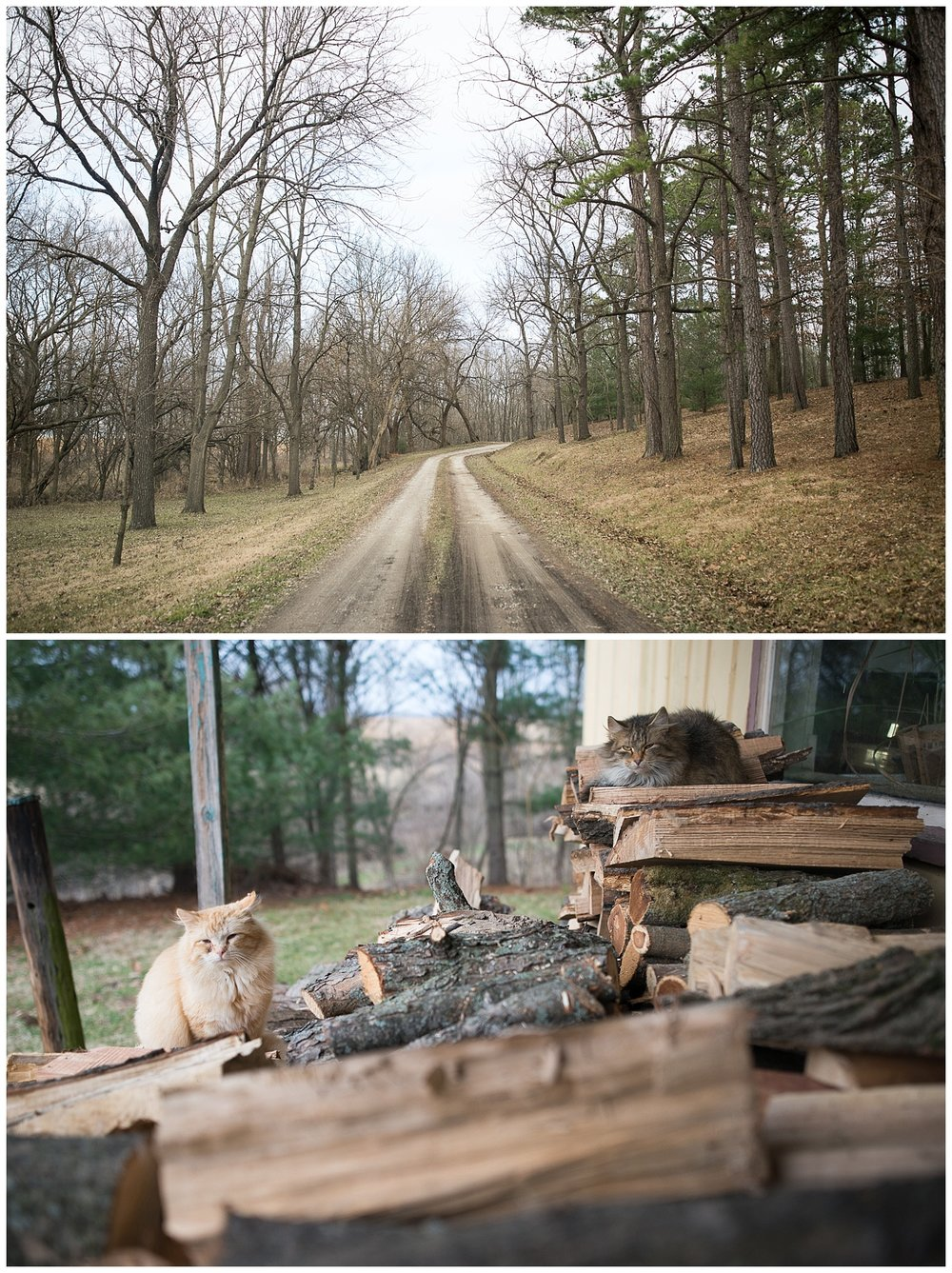 The lane leading to the Gould compound.  I bet it's lovely in the spring when the grass turns green.  Cats hanging out on the wood pile outside of the woodshop.