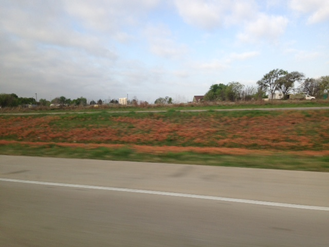 "Orange roadside wildflowers as seen from the moving car.  These paired with the just beginning to bloom state flower - the bluebonnet - made for a very lovely drive.  Mary did a little research and we're guessing this flower is Indian Paintbrush.  This area is in Hardiness Zones 8a and 8b and I remember reading about ""Indian Paintbrush"" a long time ago in a seed catalog.  Very cool to see it in person."