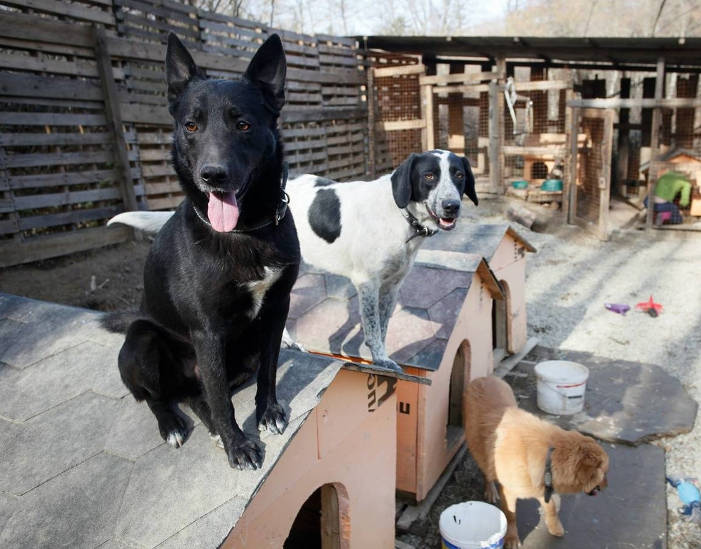 SochiDogs Shelter_homePage