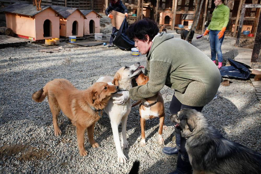 SochiDogs_Shelter_2