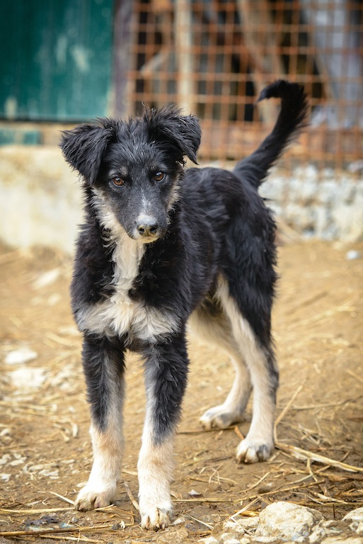 Igor, adopted