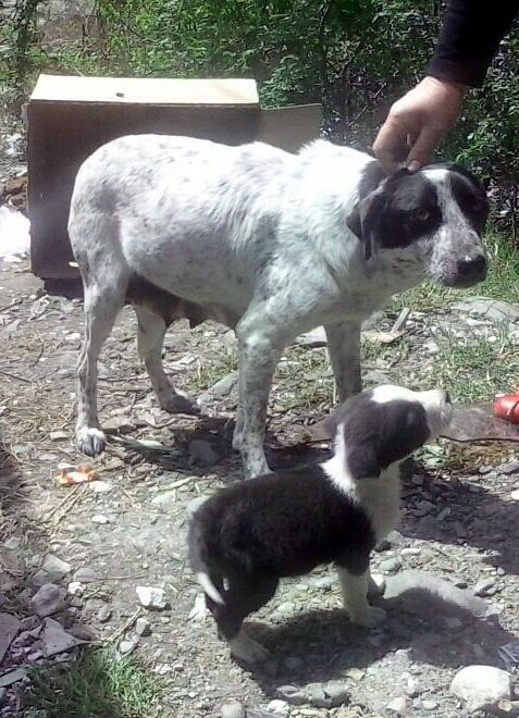 Mom with the puppies when found