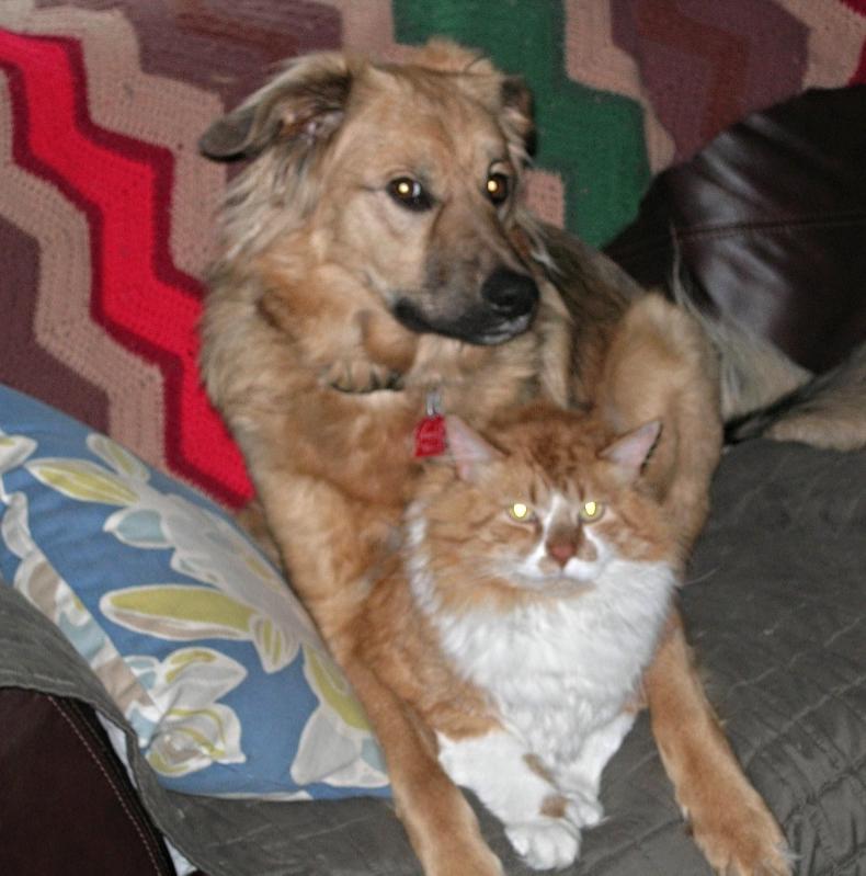"Sashi (Sasha), Maine ""Sashi is great!She is loving life!She loves to playfully chase the cats. """