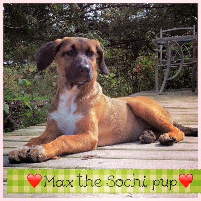 "Max, Ontario ""Max is home with us! He is more than happy to be with our new family and his curiosity around our place. Thank you so much for let him into Canada home safe and sound!!! Thank You!"""