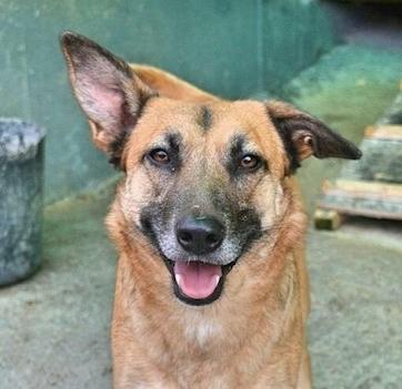 Alisa,adoption pending Click here to meet Alisa