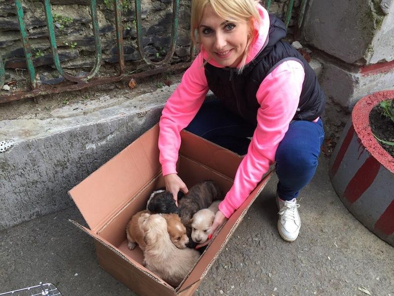 Sochi Dogs rescue _03/21/2016