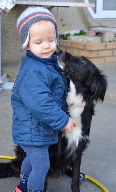 Sochi Dog