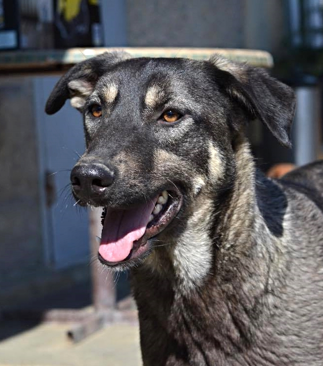 Shusha, adoption pending Click here to meet Shusha