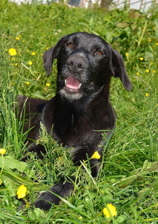 Adopt Sochi Dogs