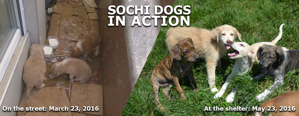 Sochi Homepage.jpg