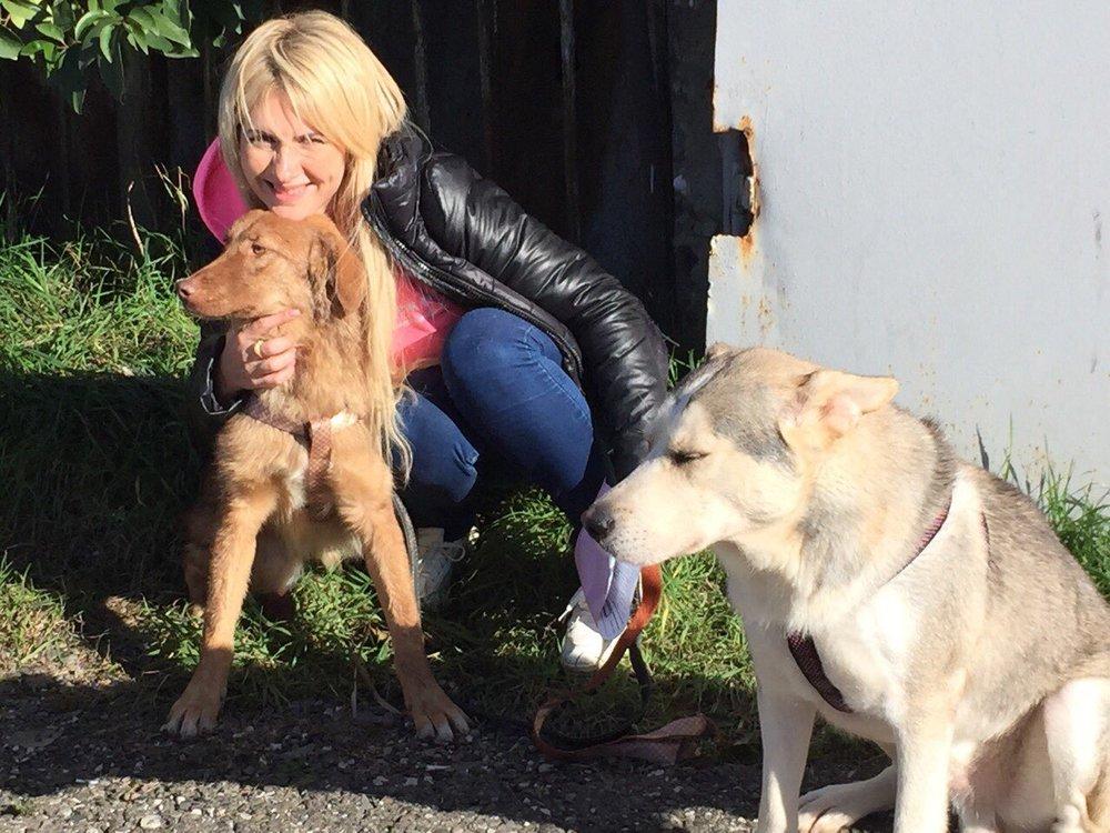 Sochi DOgs - Vlada