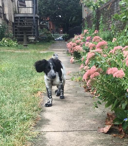 Poncho (Freckles), PA