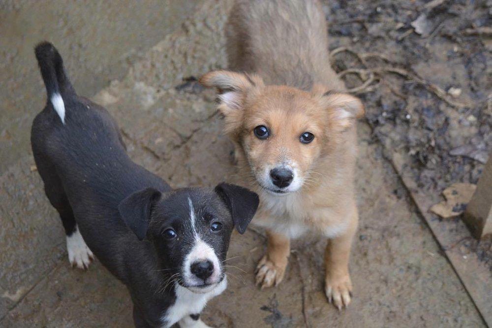 Sochy Dogs