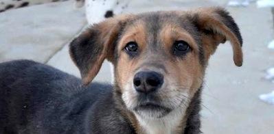Adopt a Sochi Dog