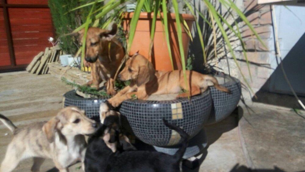 IMG_0699.JPGSochi Dogs.jpg
