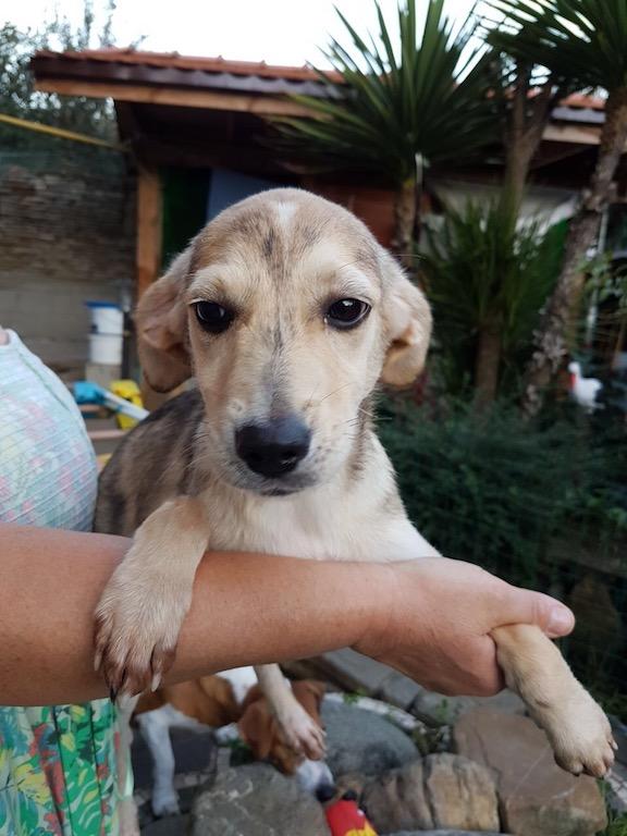 IMG_0596.JPGSochi Dogs.jpg