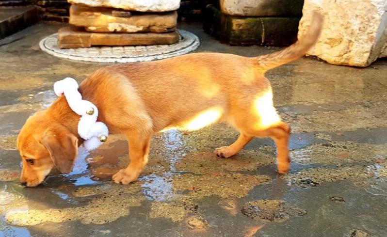 Sochi_Dogs.jpg