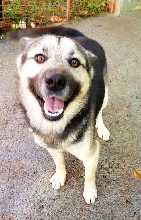 Sochi_Dogs.org