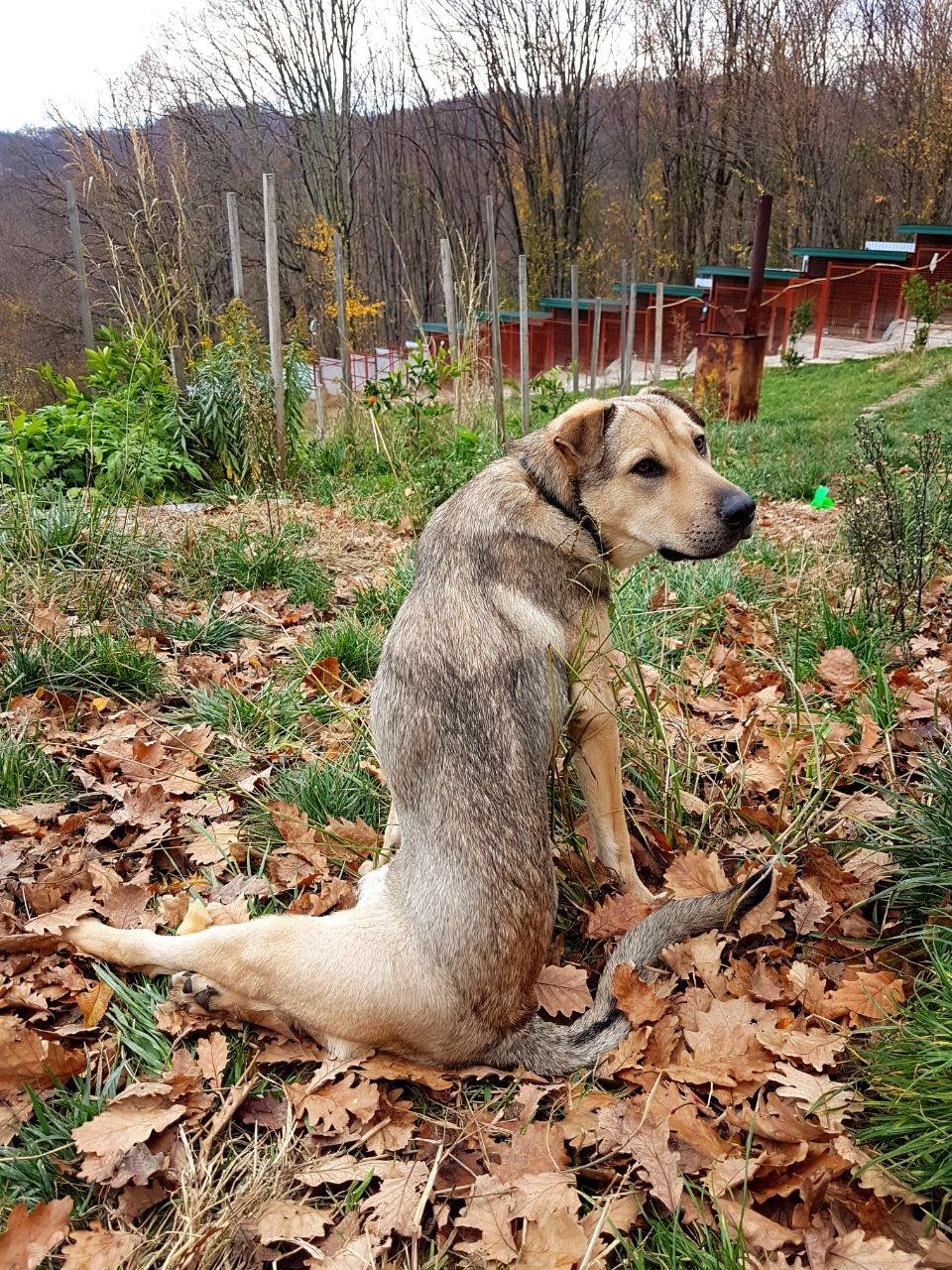 Phil Sochi Dog