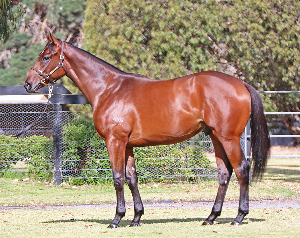 Lot 582 Colt I Am Invincible x You're Discreet, by Elusive Quality (USA)