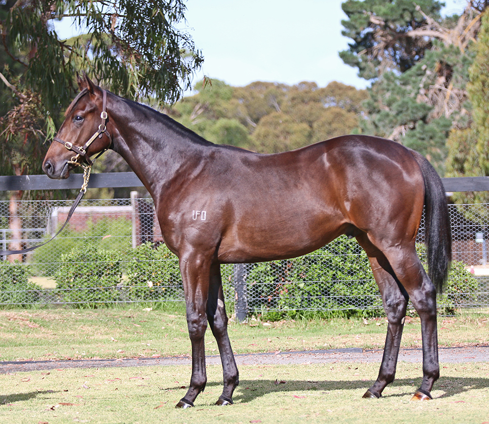 Lot 696 Colt Medaglia D'Oro (USA) x Carolina Bella, by Zabeel