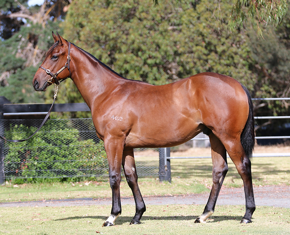 Lot 707 Colt I Am Invincible x Celebrity Girl, by Starcraft