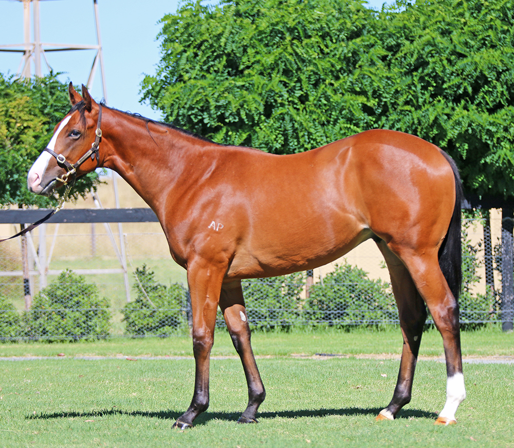 Lot 420: Bay Colt, Dawn Approach x Very Discreet, by Exceed And Excel