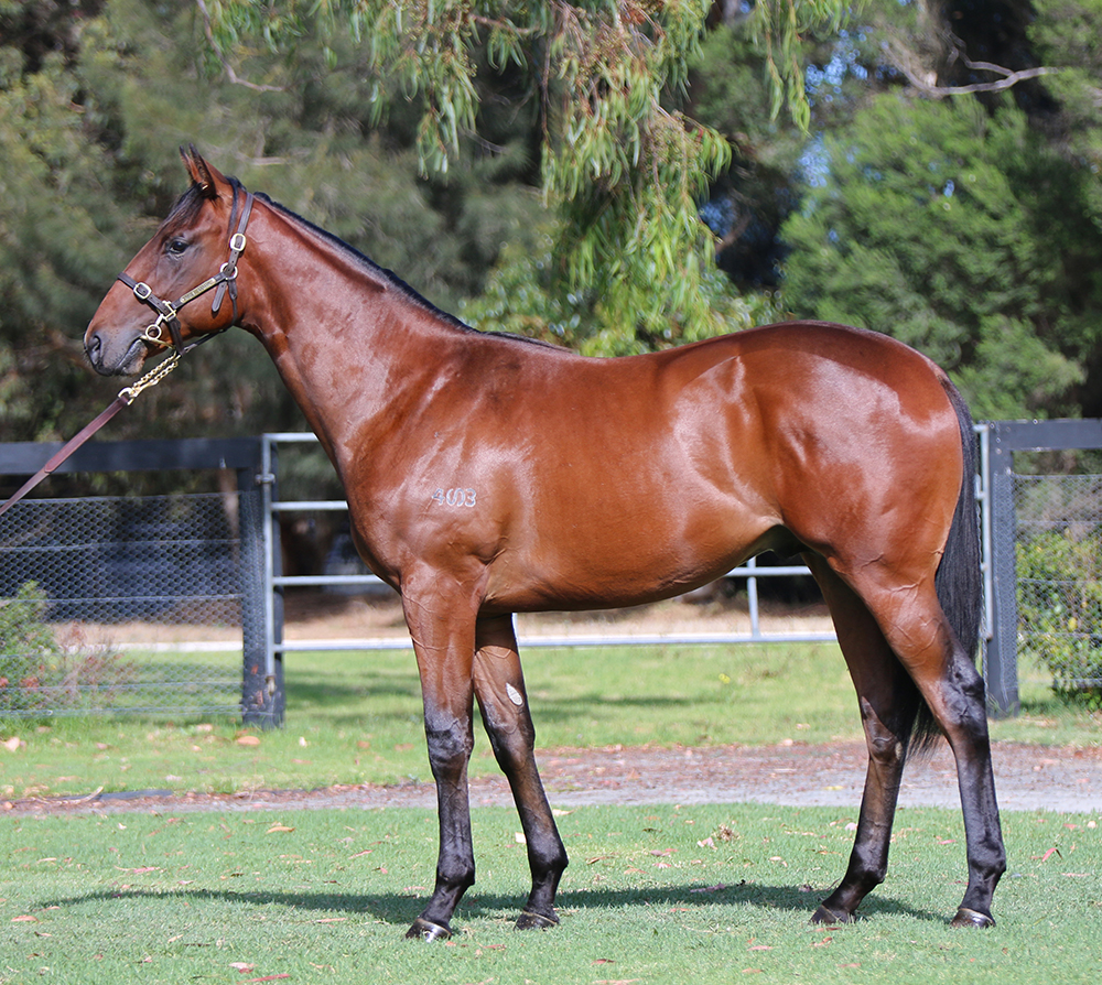 Lot 649: Bay Colt, Snitzel x Dances Of Waves, by Anabaa