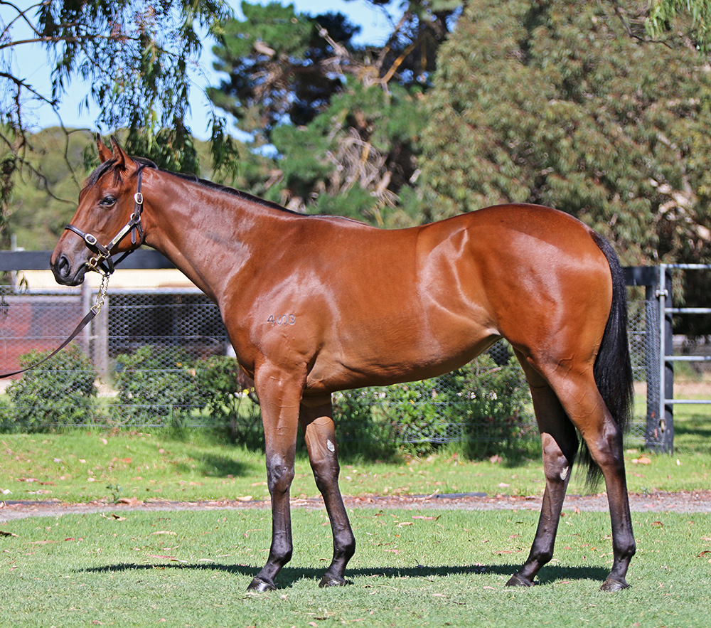 Lot 814: Bay Filly, I Am Invincible x Hussy By Choice, by Redoute's Choice