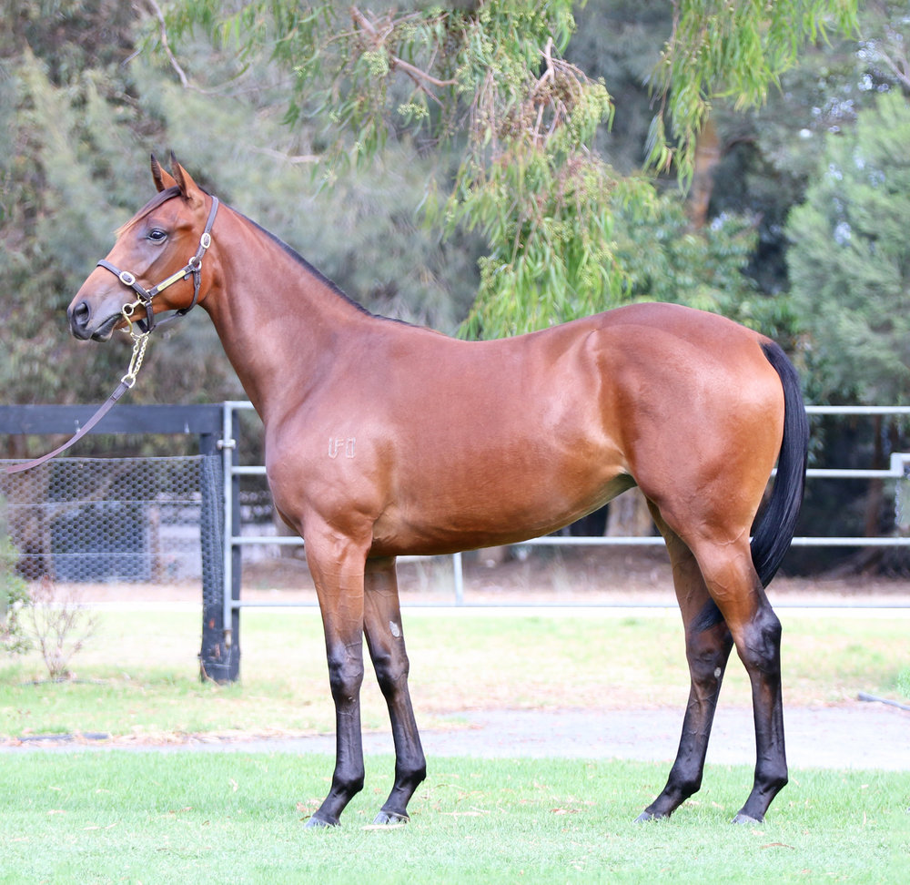 Lot 82 Kissable Filly 2016.jpg