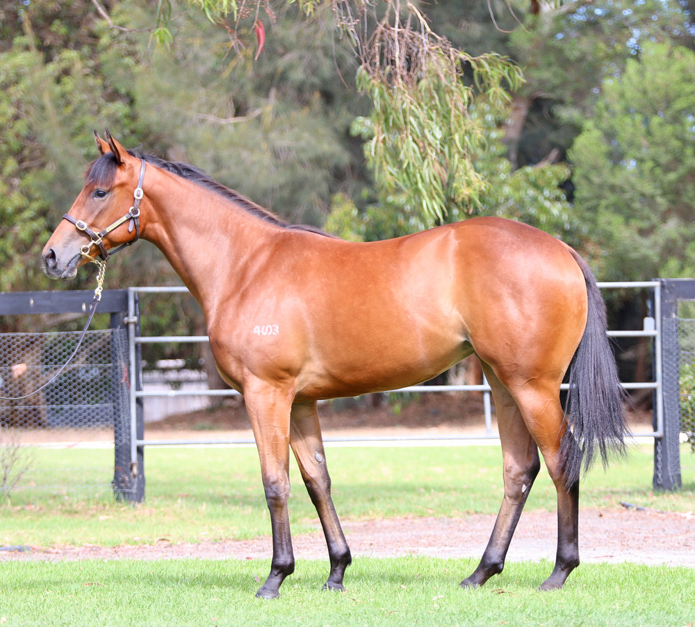 Lot 235 - Tirarri Filly 2017.jpg