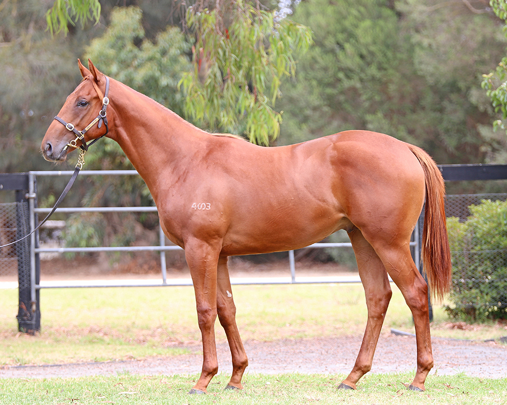 Lot 183 All Too Hard x Fast And Loose colt_low.jpg
