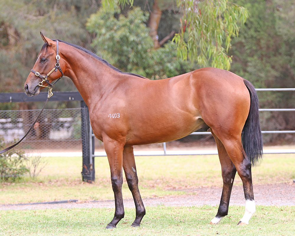 Lot 411 I Am Invincible x Resonates colt_low.jpg