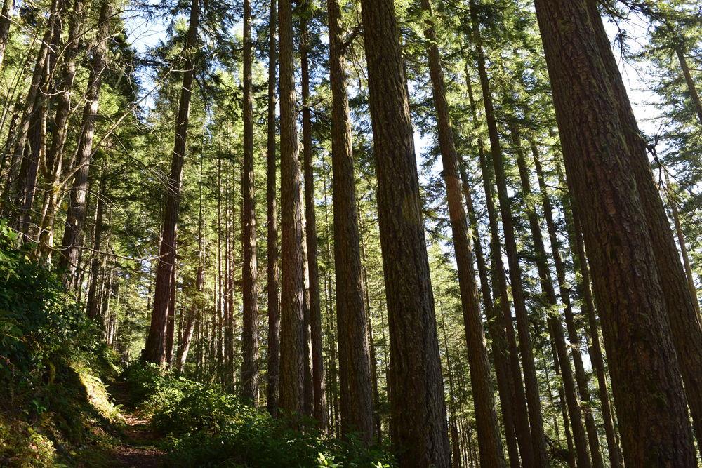 Forests near beginning.jpg