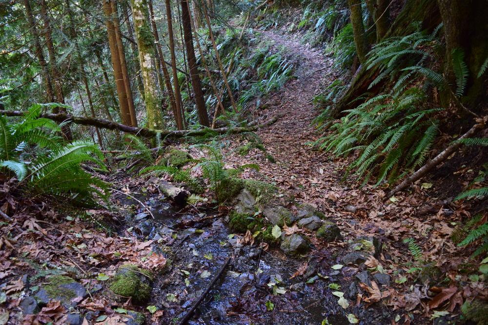 June Creek.jpg