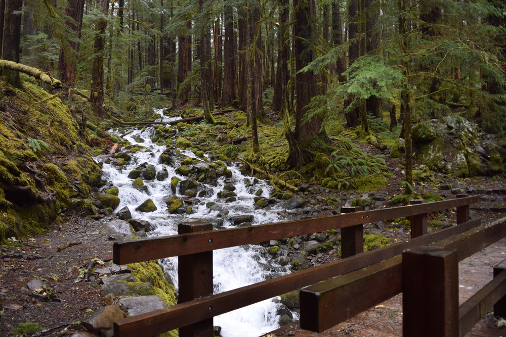 Sol Duc Trail #2