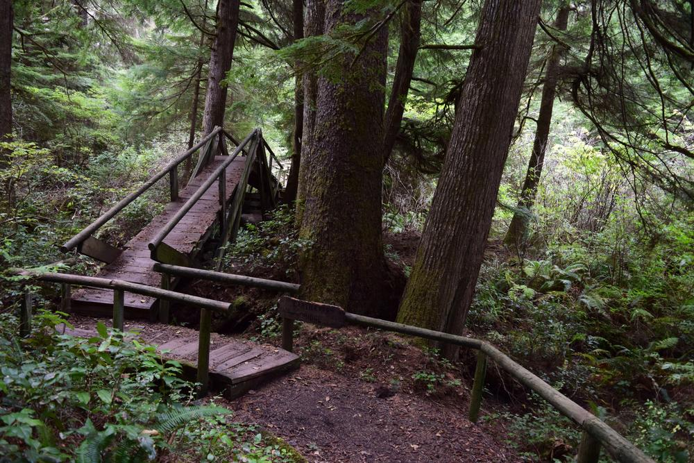 hike through forest.jpg
