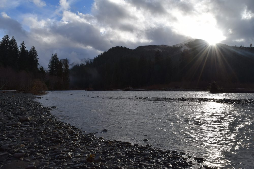 Sun breaking along the Hoh River.jpg