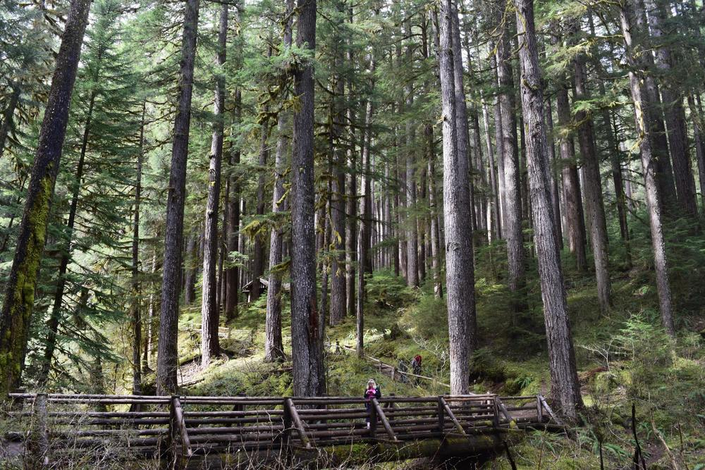 Sol Duc Valley Forest.jpg