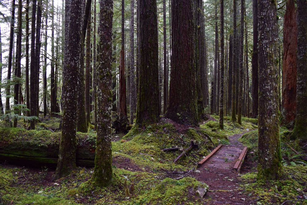Sol Duc Falls Tour: Ancient Groves Nature Trail