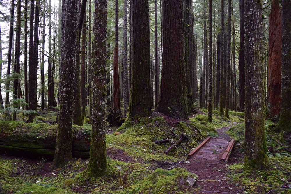 Sol Duc Falls Tour: Ancient Groves Nature Trail