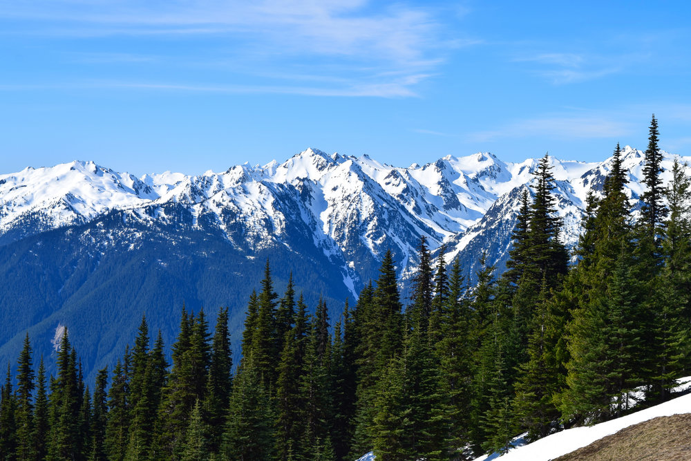 Hurricane Ridge     Book Now