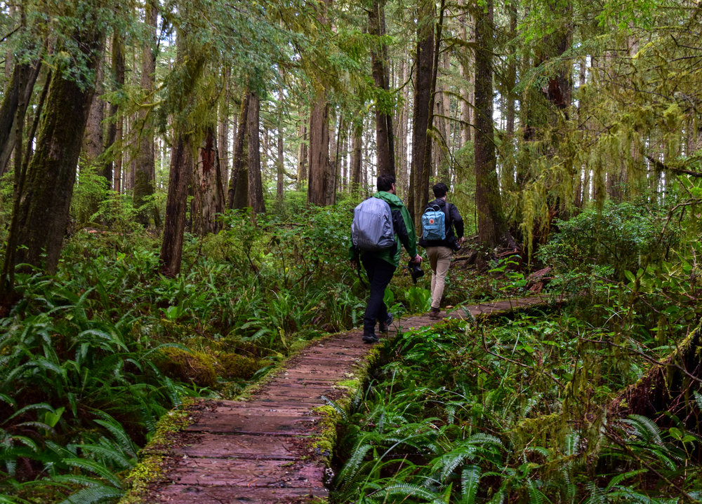 Boardwalk trail to Cape Alava