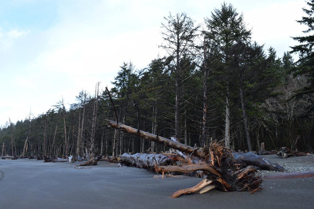 3 - Coastal Forest.jpg