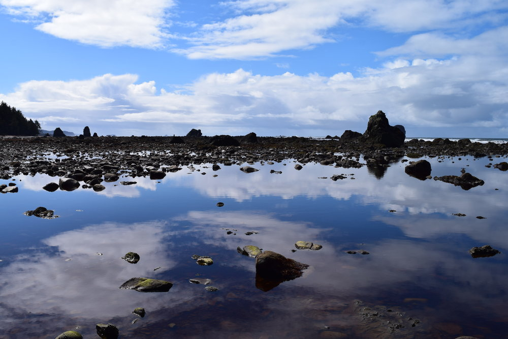 3 - Reflections at Cape Alava.jpg