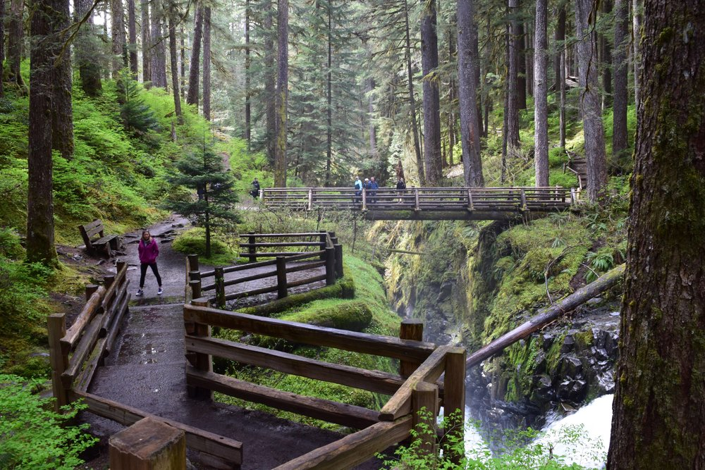 Multiple lookouts to view the Sol Duc River