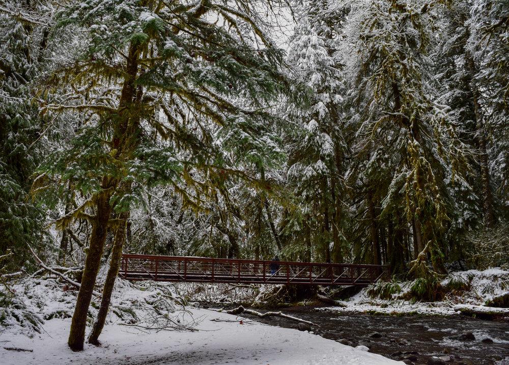 Winter Views of Barnes Creek