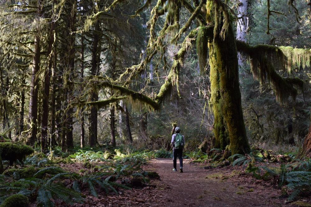 Hiking the Hall of Mosses.jpg